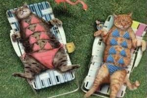 chats en bikini