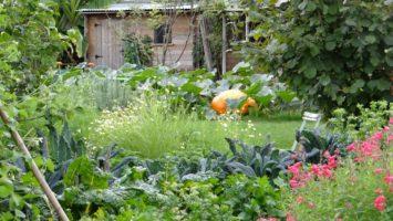 jardin en fleur